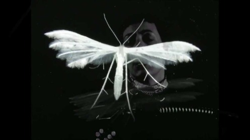 white insect